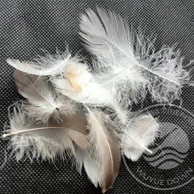 2-4cm Grey Goose