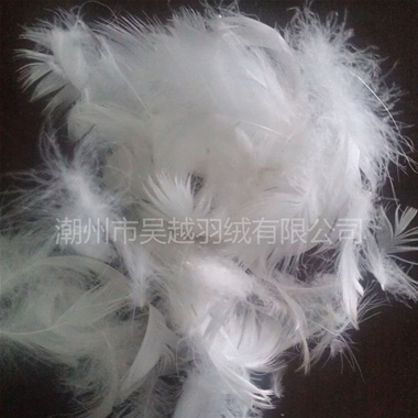 2-4 Pure White Duck Feather Washing with Water